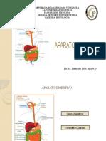 Aparato Digestivo Histologia 2.pptx