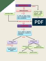 NEUROCIENCIA-convertido.pdf