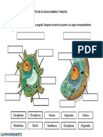 celula vegetalanimal.pdf