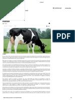 Holstein.pdf