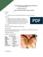 INFORME 1 - Entomologia GB