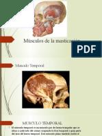 MUSCULOS DE LA MASTIGACION.pptx DIAPO E