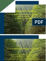 Plantaciones forestales.pdf