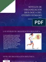 Niveles de organización biológica del cuerpo humano