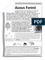 forest reading passage