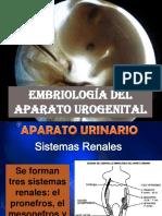 Embriologia del aparato urogential