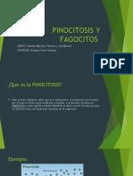 PINOCITOSIS Y FAGOCITOS.pptx
