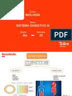 B - 4TO AÑO - SISTEMA DIGESTIVO III - SIN AUDIO