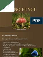45_fungos