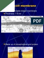 cell membrane