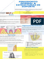 Infografia Periodonto Sano & Estructuras de soporte