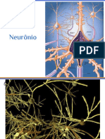 Neuroanatomia - Imagens importantes