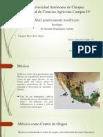 Maíz Transgénico - Ecología