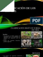 Clasificación de los hongos.pptx