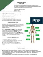Sistema óseo y muscular