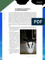 bienestar animal, bienestar de terneros lactantes I, consucta de mamar redirigida
