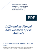 Differentiate Fungal Skin Diseases of Pet Animals