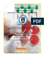 Informe de microbiología N°02 - Coloraciones (2