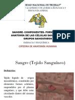 Semana_7_seminario_clase 3 Anato Humana Sangre- Componentes Anato Hum Final