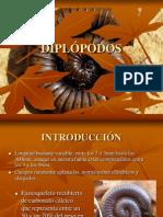 Diplopodos