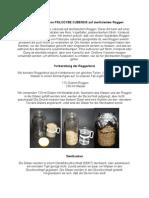 Psilocybe cubensis Kultivation