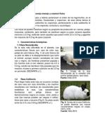 Resumen-Grupo-12-Razas-de-conejo.pdf · versión 1