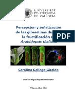 Gallego - PERCEPCIÓN Y SEÑALIZACIÓN DE LAS GIBERELINAS DURANTE LA FRUCTIFICACIÓN EN ARABIDOPSIS T...