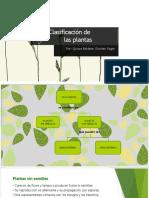Clasificación de las plantas.pptx