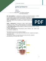 Cuerpo vegetal primario