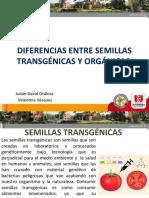 Semillas transgenicas y organicas