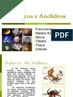 Moluscos e Anelídeos