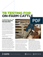 TB-testing-for-on-farm-cattle