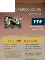 reproduccion sexual en animales.ppt