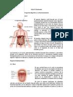 guia # 3 sistema Digestivo 2  (1)