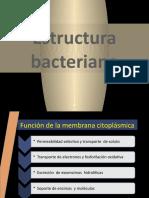 2015 Estructura bacteriana