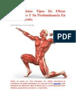 Los_Distintos_Tipos_De_Fibras_Musculares_Y_Su_Predominancia_En_Cada_Musculo(2)