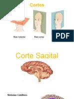 CORTES NEURONALES