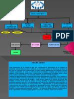 Actividad de  Modelos administrativos