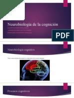 Neurobiología de la cognición