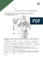 A circulação pulmonar e a circulação sistémica.docx