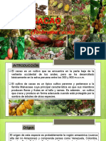 cacao ppttt.pptx