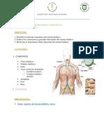 8. Guía Linfático.pdf