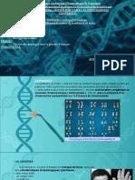 trisomie 21.pptx