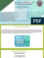 PCR-TIEMPO-REAL1.5.2