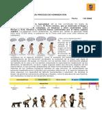 Guía proceso de hominización