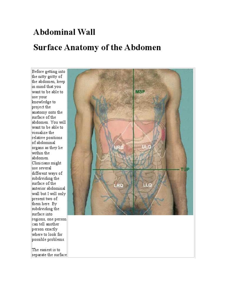 Abdominal Walls | Abdomen | Musculoskeletal System