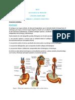 FICHA DE CATEDRA - Esófago Anatomía.pdf