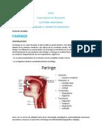 FICHA DE CATEDRA -  Faringe Anatomia (1)