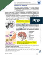 cerebro emocional 6pg.pdf
