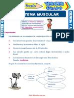 El-Sistema-Muscular-para-Tercer-Grado-de-Primaria.doc